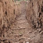 professionals should install a septic system